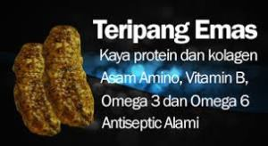 Khasiat teripang emas dalam jelly gamat goldg yang ampuh obati luka borok di kaki karena alergi